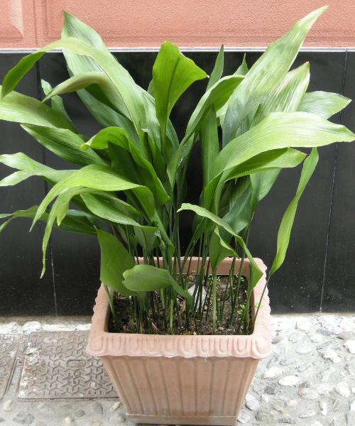 Piante che purificano l ambiente sapete quali sono for Piante da interno