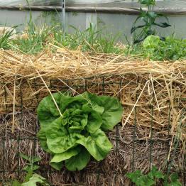 raetia-bio-aiuola-colture-in-verticale