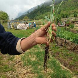 raetia-bio-aiuola-terra-morbidissima