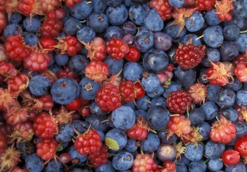 frutti-di-bosco