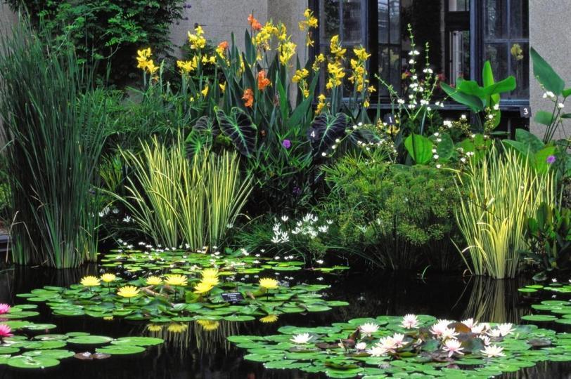 le-migliori-piante-acquatiche-per-il-giardino_a4654fd711a52178c296ea03fe4ea0af